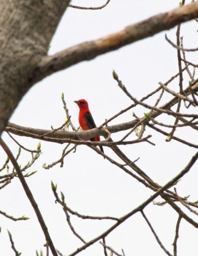076 2010_04_27 El cardenal_web
