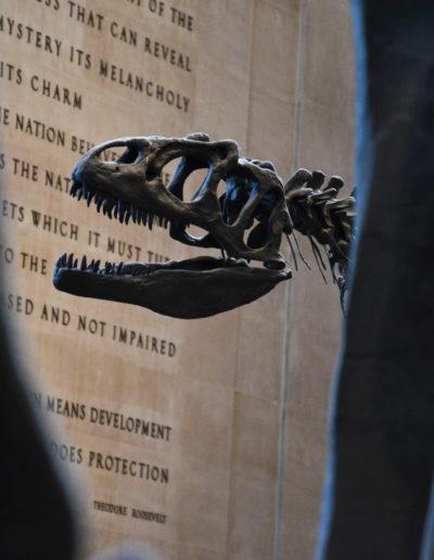Natural Museum NY